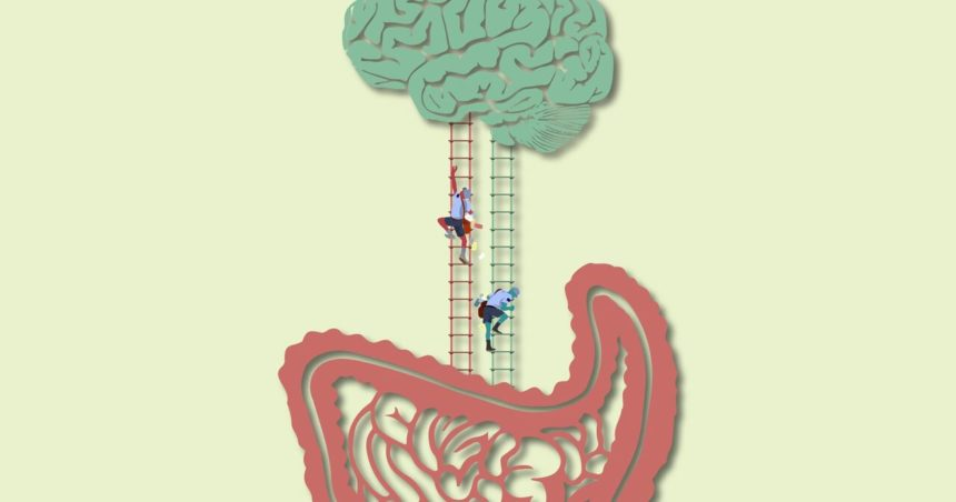 The connection between your gut and your brain